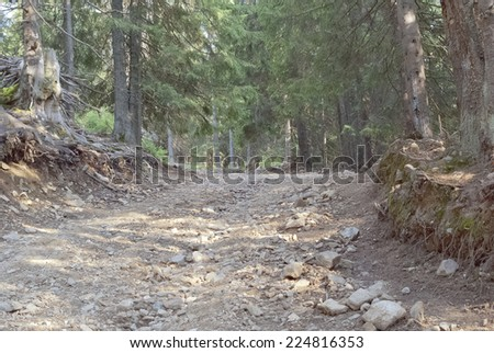 Rough road in forest - stock photo
