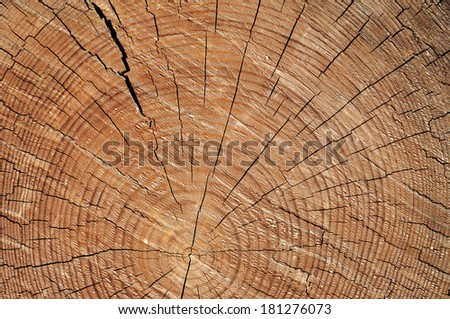 Rough wooden cut texture with tree rings and cracks - stock photo