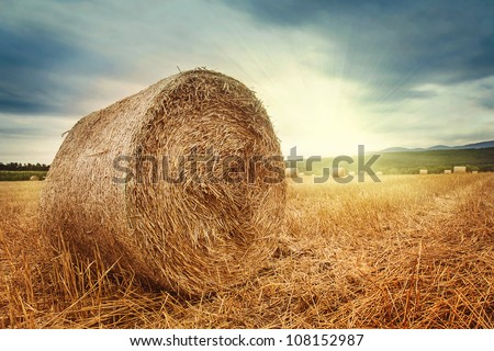 Round bales of straw in the meadow - stock photo