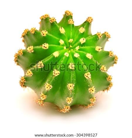 Round cactus isolated on white background - stock photo