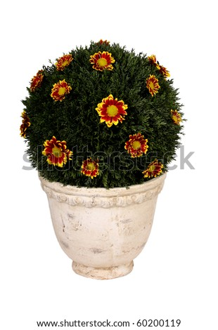 Round flowering bush - stock photo