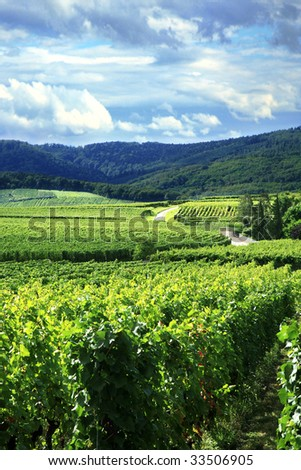 Route des vines in Alsace - France, Vosges Mountains. Vineyard. French country. - stock photo