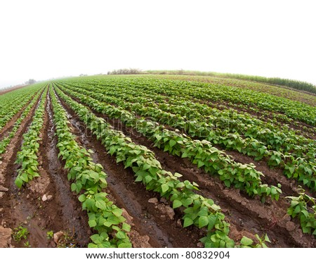row crop agriculture - stock photo