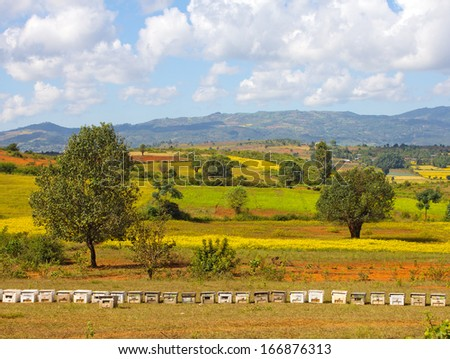 row of beehives on agricultural fields, hills in the background, Myanmar(Burma) - stock photo