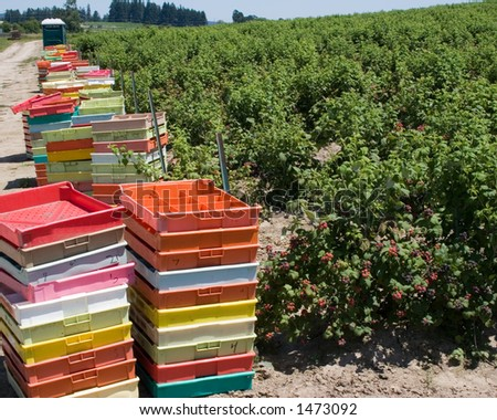 Row of Berry Pallets - stock photo