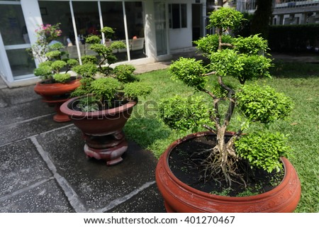 Row of bonsai trees  - stock photo