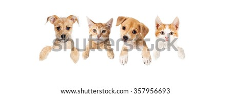 Row of cute puppies and kittens with paws hanging over a blank sign. Image sized to fit a popular social media timeline photo placeholder. - stock photo