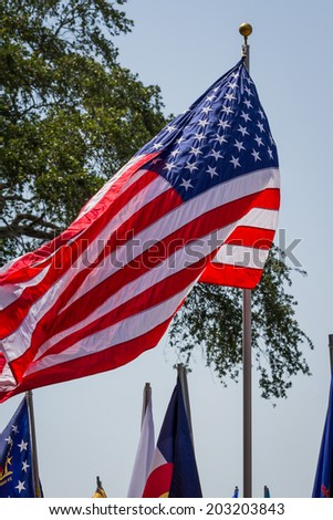 row of flags reprinting the United States of America on veterans day - stock photo