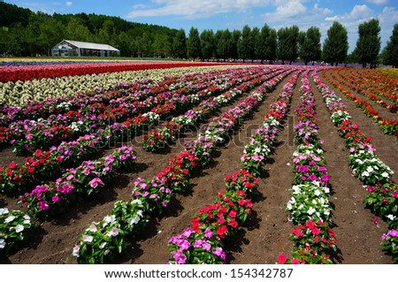Row of flower in garden, north of Japan - stock photo