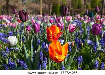 Row of multiple colored flowers in a bright sunny day in The Net - stock photo