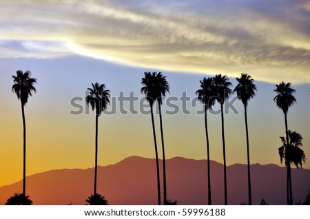 Row of palm trees against setting sun and mountains - stock photo