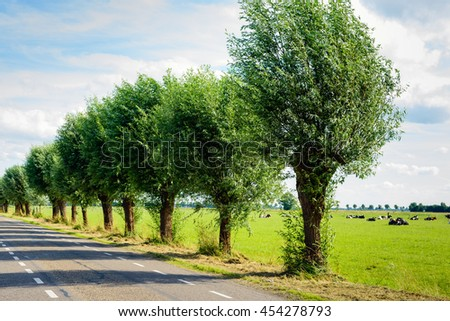 Row of pollard willows on the side of a country road. It's a sunny day in the summer season. Ruminating cows are lying in the meadow. - stock photo