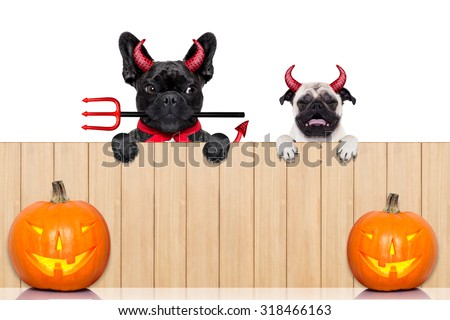 row of pumpkin dogs in a row behind a wall of wood dressed as devil demons, isolated on white background - stock photo