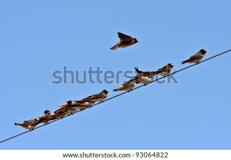 Row of swallows perched on overhead wire - stock photo
