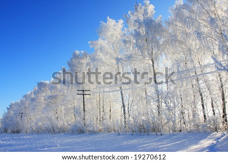 Row of the winter trees and electricity line. - stock photo
