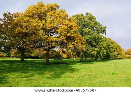 Row of Trees in a Green Field - stock photo