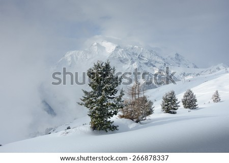 Row of trees in front of a mountain in fog - stock photo