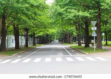 Row of Trees with road. - stock photo