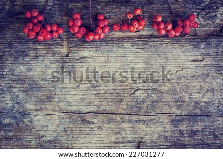 rowan berries on  rustic wooden background/ Autumn background with red berries and copyspase  - stock photo