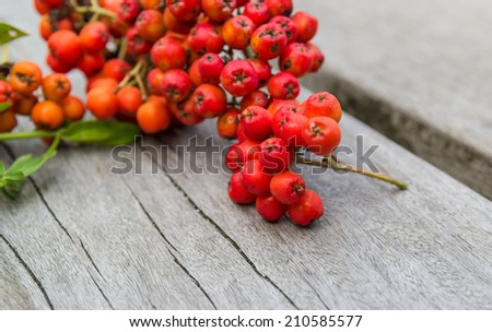 Rowanberry or ashberry on a wooden board - stock photo