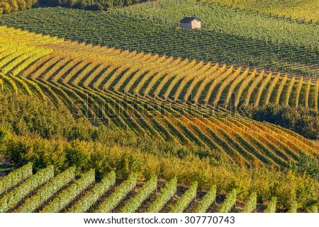 Rows of backlit autumnal vineyards in Piedmont, Northern Italy. - stock photo