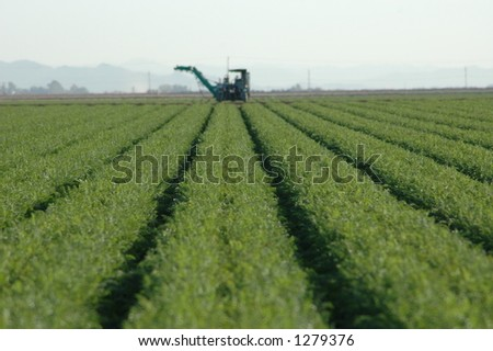 Rows of crops with farm machinery visible in the distance. Mountain backdrop and trees are also visible. - stock photo