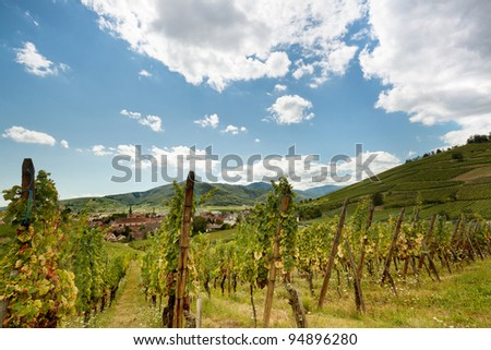 Rows of grapevines in the vineyards along the famous wine route in Alsace, France - stock photo