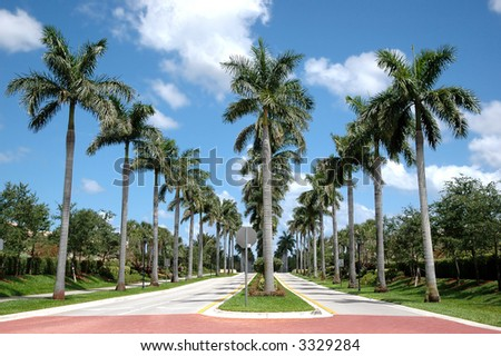 Rows of palm trees along roads - stock photo