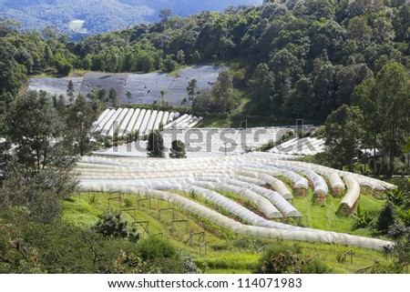 rows of seedlings grow in a greenhouse - stock photo
