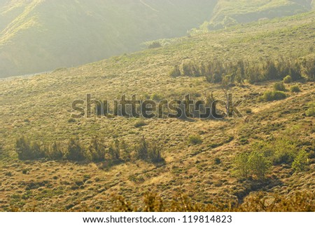 Rows of Trees in Mountain Haze - stock photo