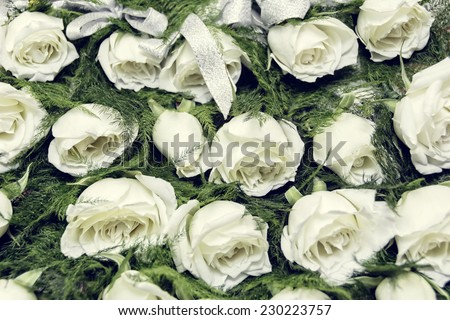 Rows of white rose boutonniere for wedding entourage - stock photo