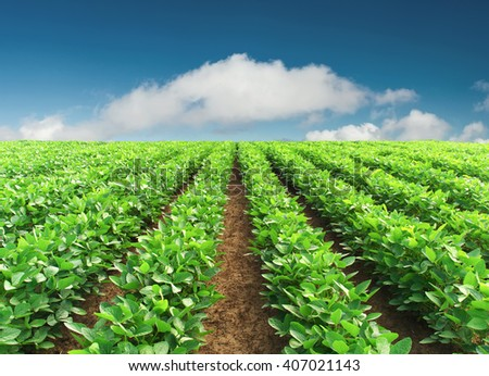 Rows on the field. Agricultural landscape in the summer time - stock photo