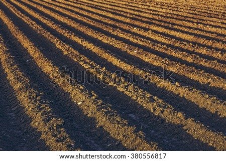 Rows pattern of plowed soil for potatoes crops in spring. - stock photo