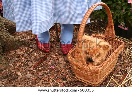 Ruby slippers and dog in a basket - stock photo