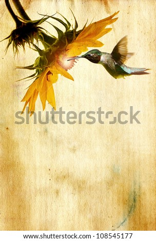 Ruby throated hummingbird  male on a  sunflower head with glowing center on grunge texture antique paper  with copy space. - stock photo