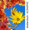 rudbeckia - fall flowers - stock photo
