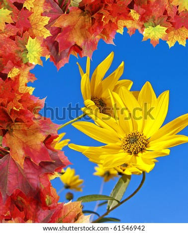 rudbeckia - fall flowers - stock photo