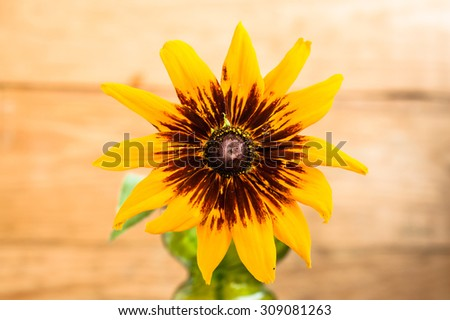 Rudbeckia summer flower on wood background, shallow depth of field useful as greeting card or birthday card. - stock photo