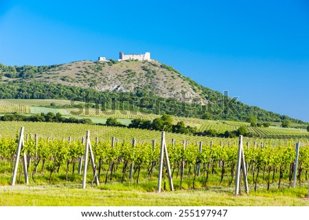 ruins of Devicky Castle with vineyards, Czech Republic - stock photo