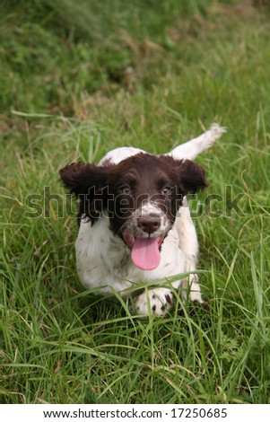 Run Puppy - stock photo