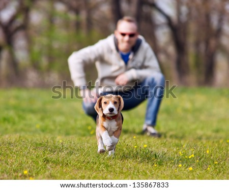 Running beagle puppy with his master on the walk - stock photo