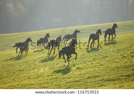 Running herd - stock photo
