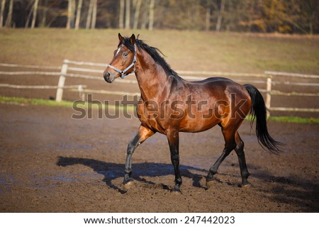 Running horse on the dirty field at summer time - stock photo