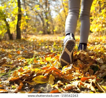 Running through the autumn forest - stock photo