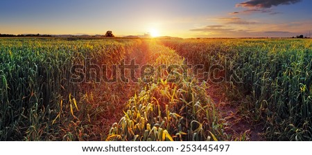 Rural countryside with wheat field and sun - stock photo