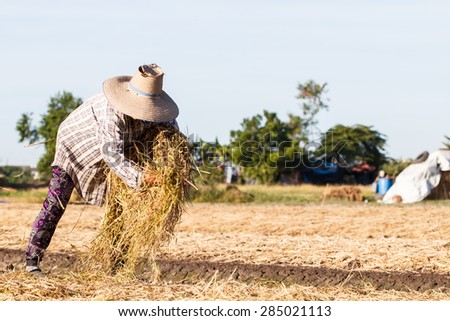 Rural farmer with haystack prepare for agriculture-2 - stock photo
