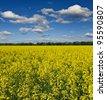 rural field landscape - stock photo