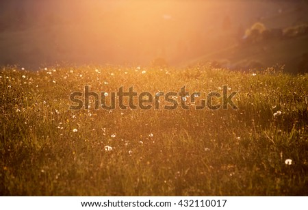 rural floral field on sunset. natural summer background - stock photo