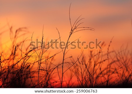 Rural grass and sunset sky with black silhouette - stock photo