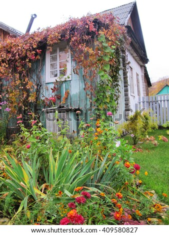 Rural house twined with virginia creeper, flowerbed and a lawn in the autumn garden - stock photo